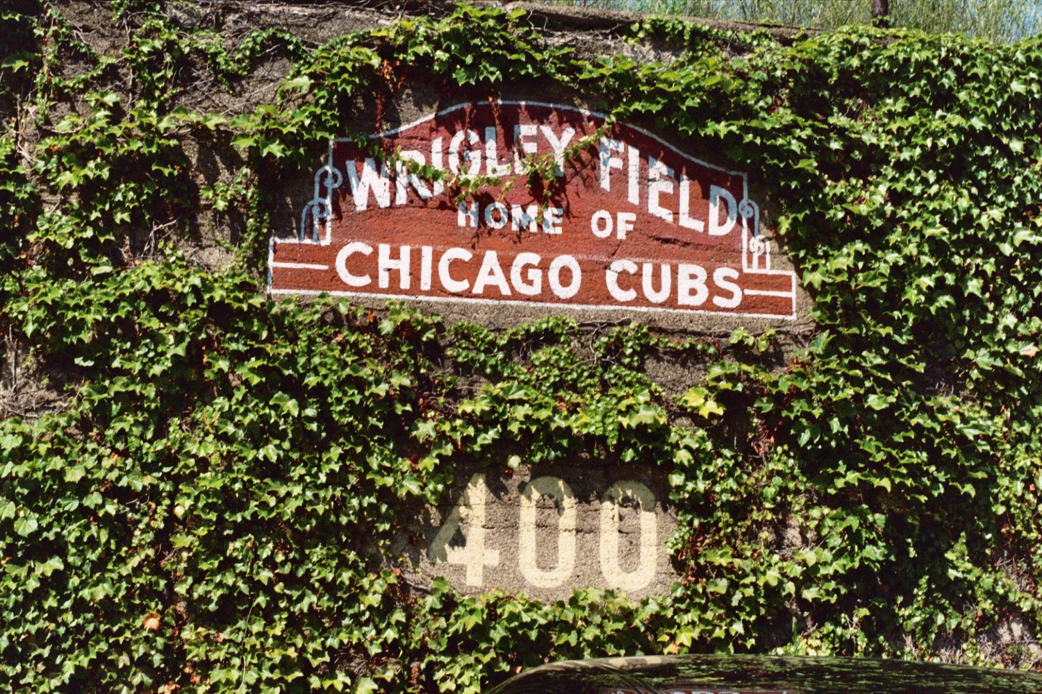 The signature ivy walls have served as an outfield perimeter at Wrigley since 1914. (Photo courtesy of lasordaslair.com)