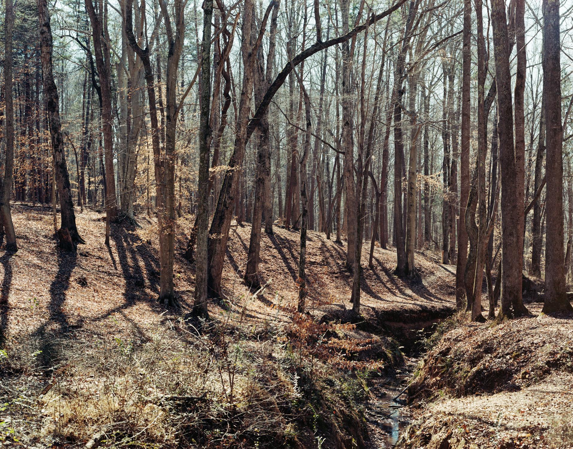 Woods_NC.jpg