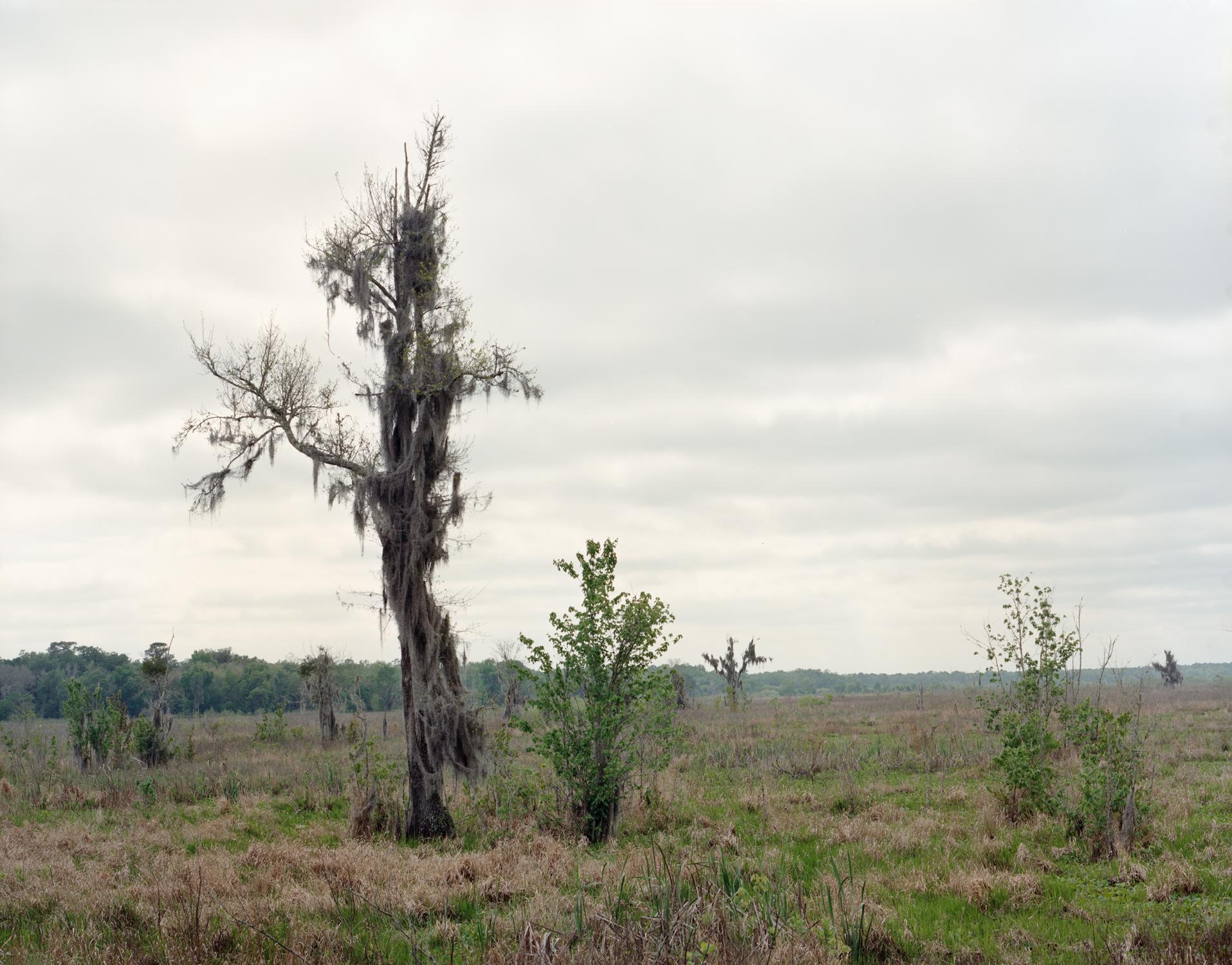 SwampGainesville 2.jpg