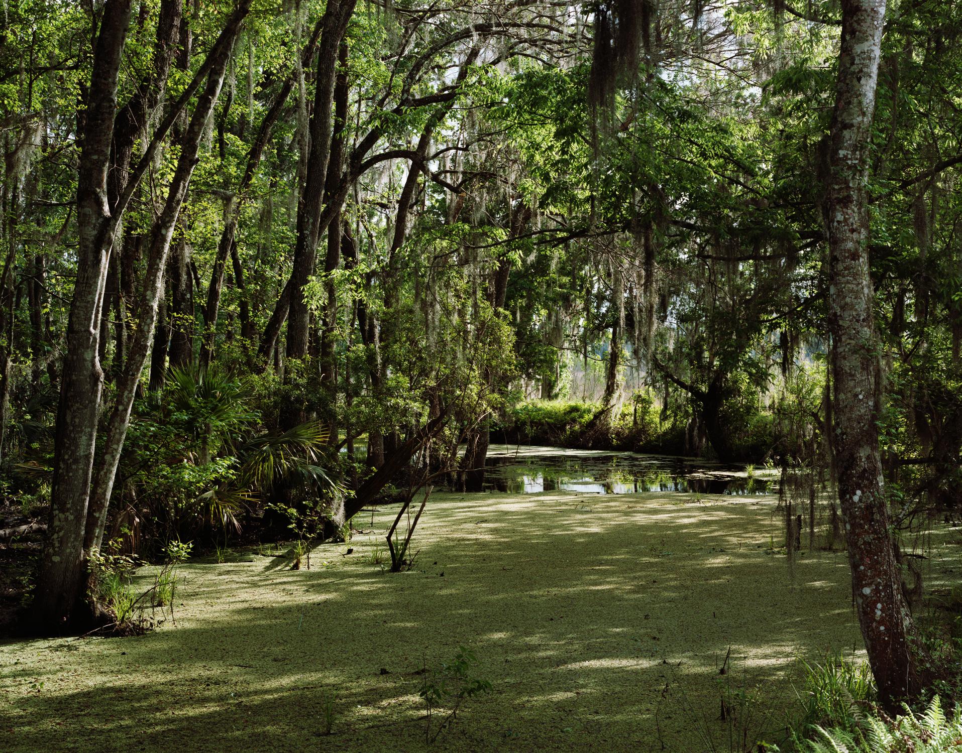 SwampGainesville.jpg