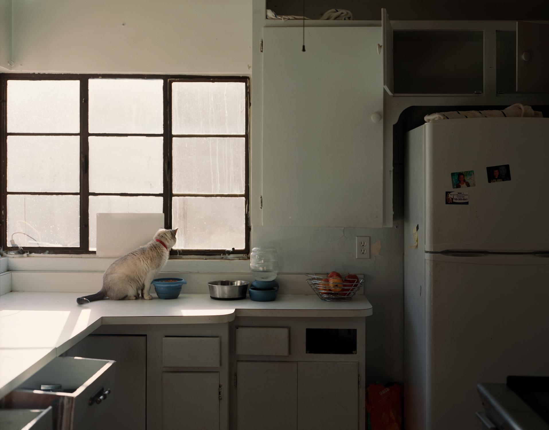 JT_Cat.jpg