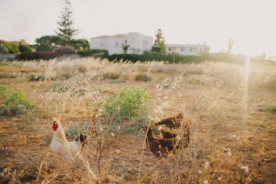 050-wedding-photographer-crete-paphos.jpg