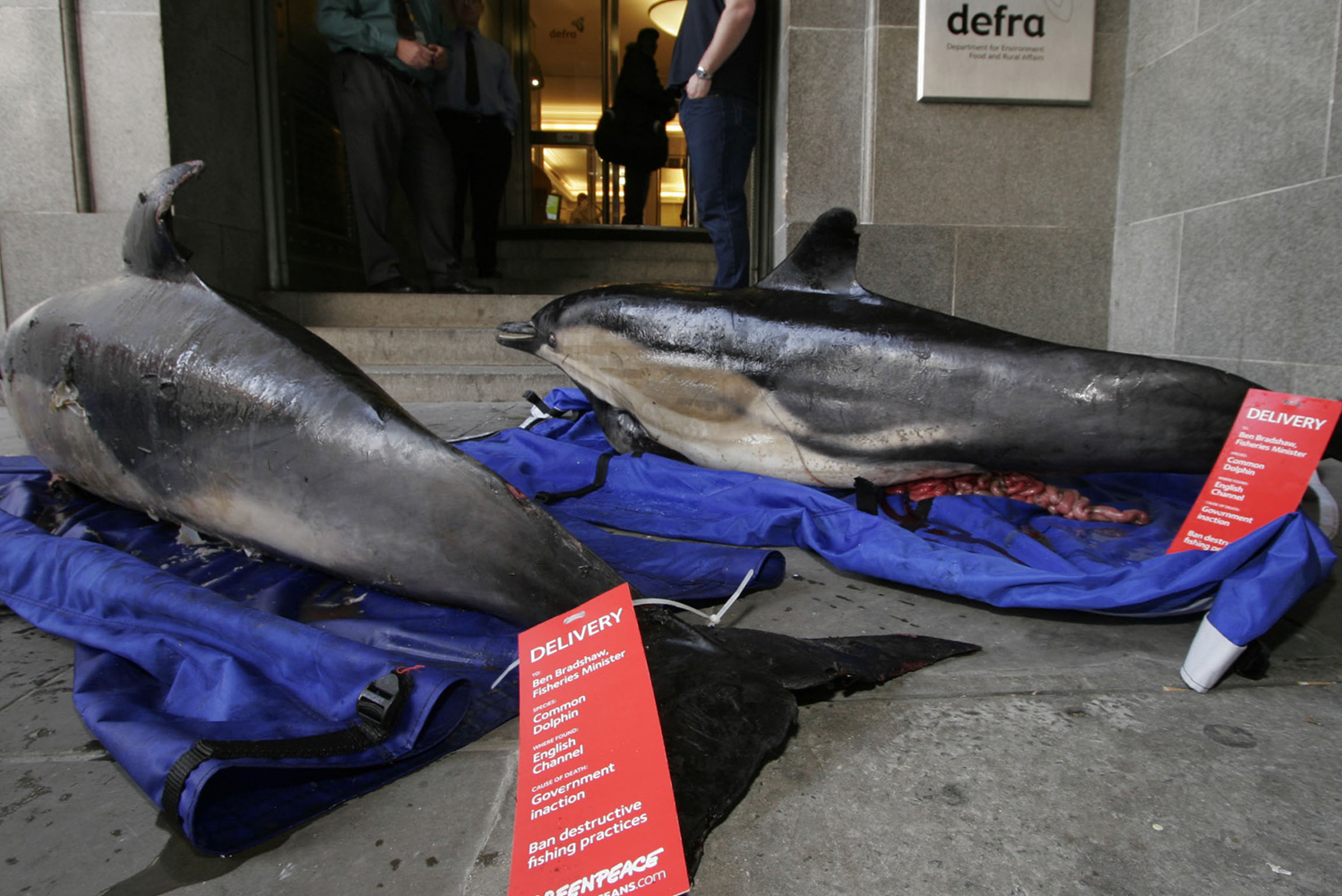 Campaign_Greenpeace_Oceans_DeadDolphin_BodyTag.png