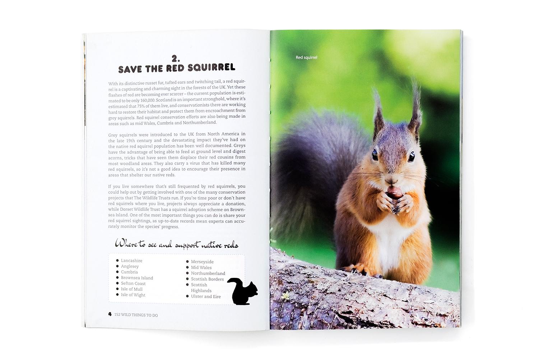 152_WildThings_Squirrel.jpg