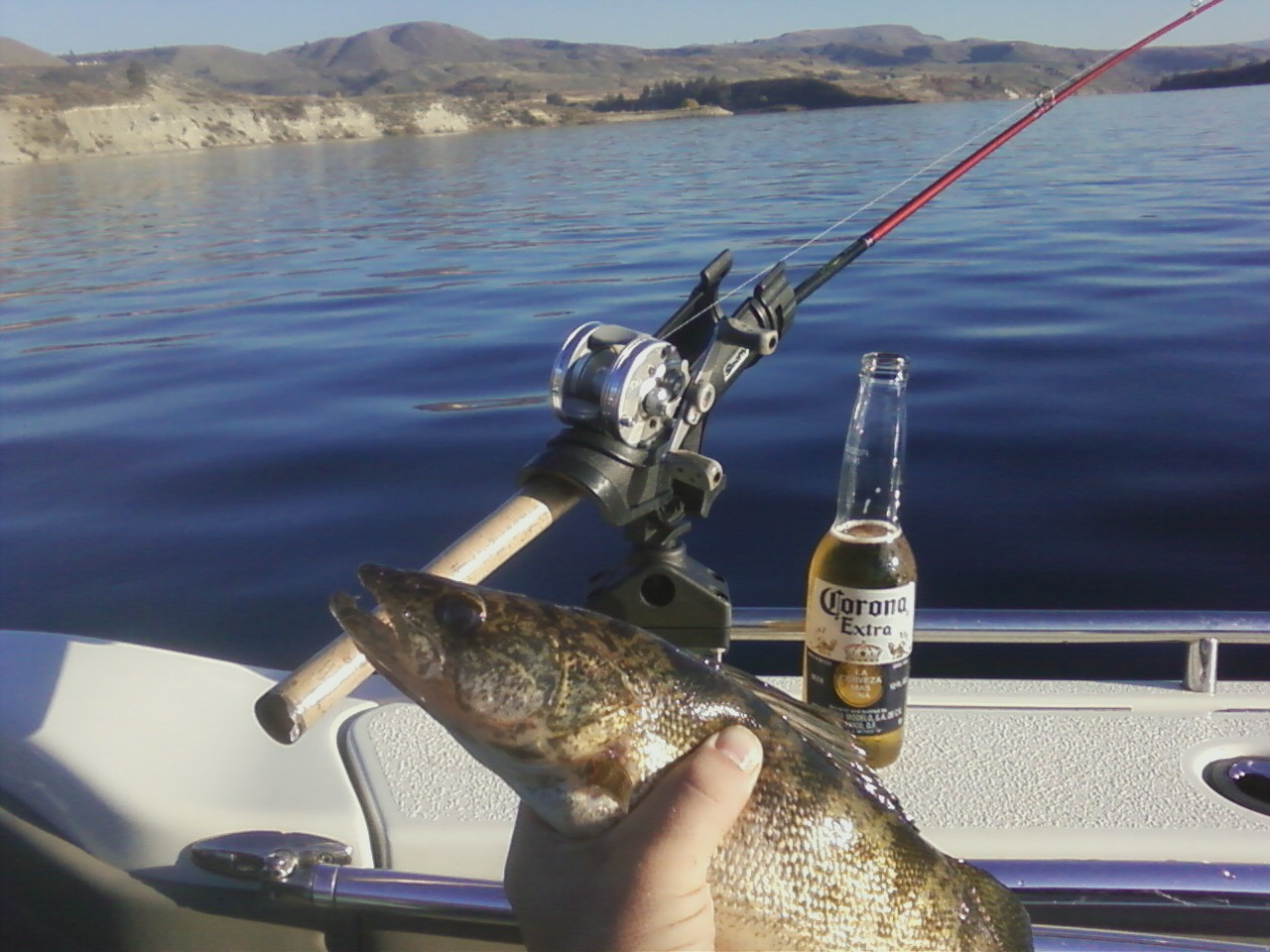 October sunshine on Rufus Woods, a fat walleye, and a cold beer. Life is good!!!