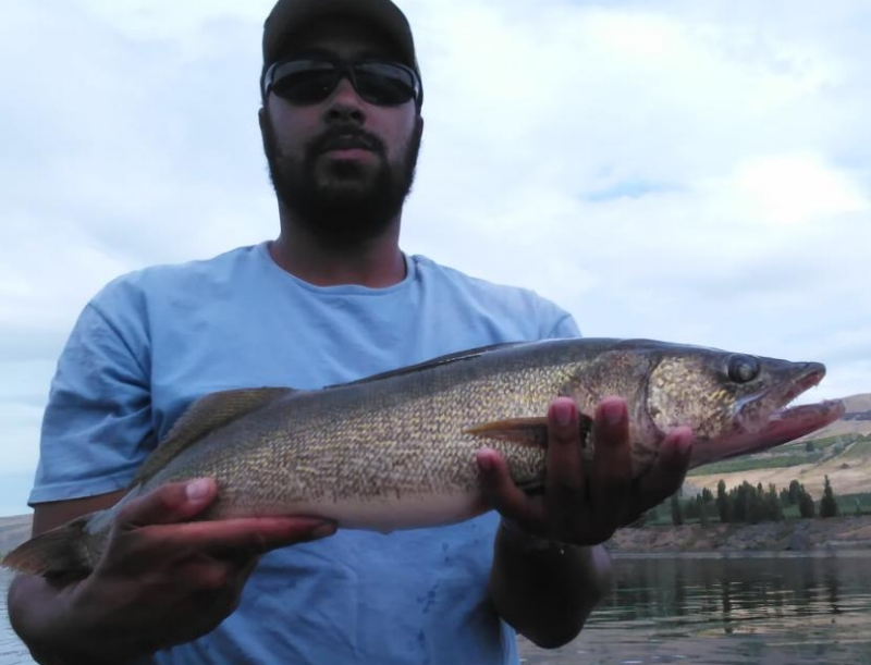 Eli with a 26.5 inch walleye weighing 5 pounds. August 28th from Rufus Woods.