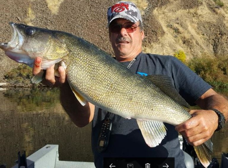 Joe M with a huge Snake River Walleye that measured 32 inches. Sep 27. Fish released.