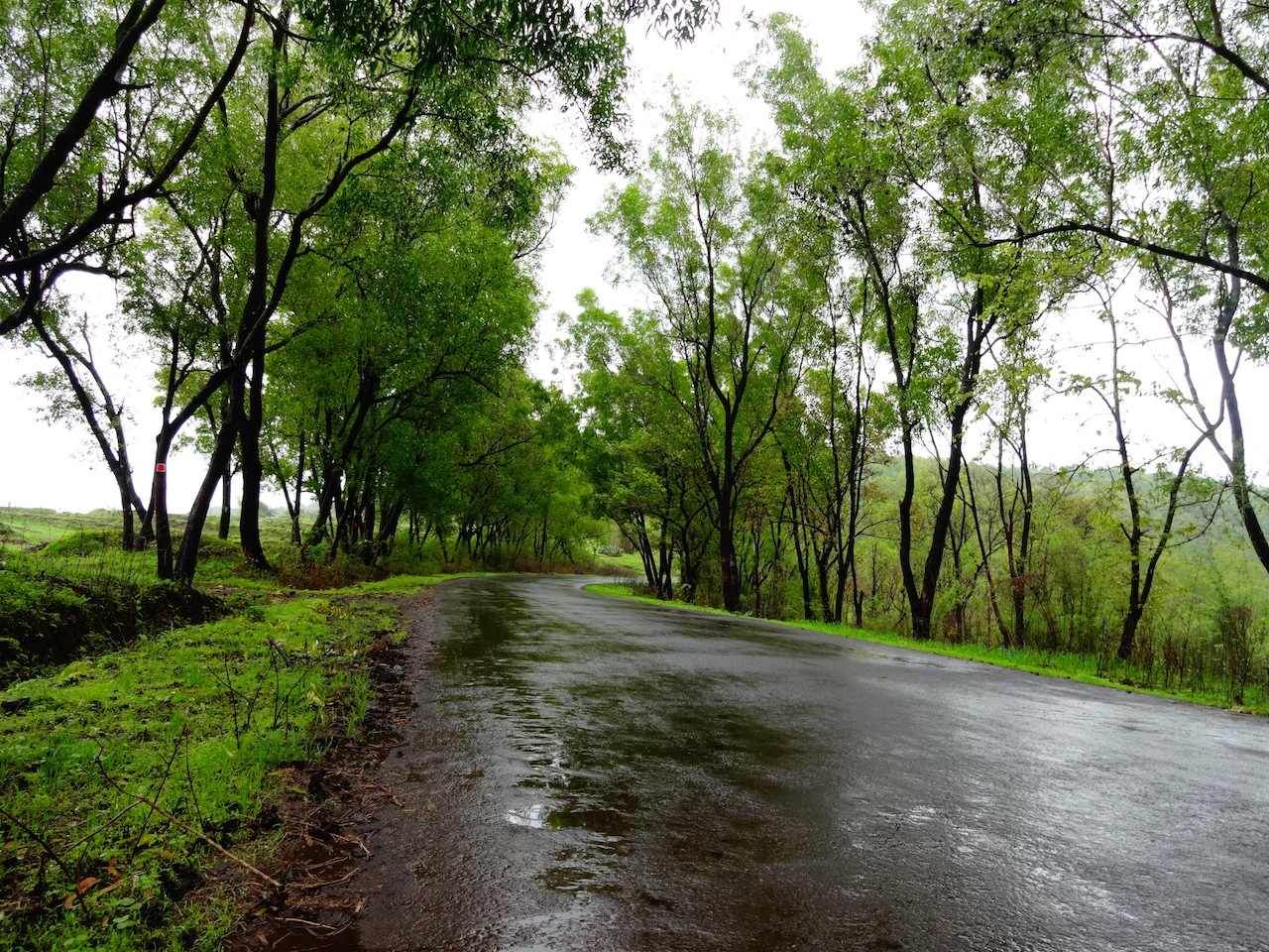 The beautiful roads through Dajipur Forest Reserve.