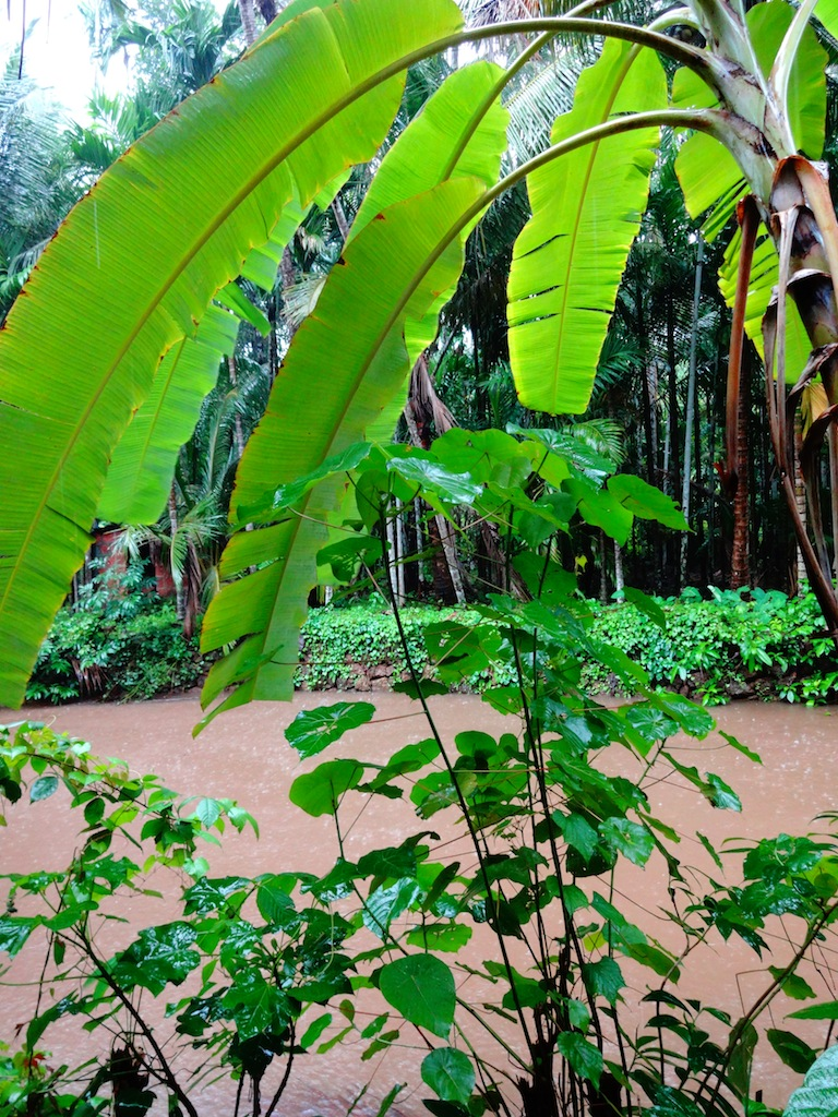 The charming walk to the the retreat in Sindhudurg...Through a plantation and a river.