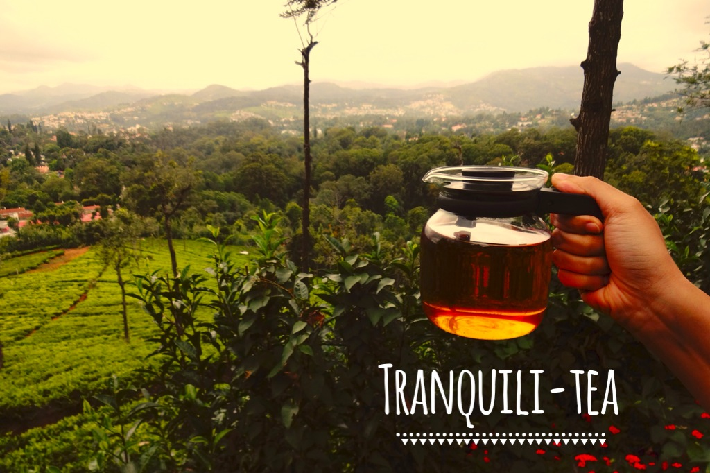 Finding tranquili-tea in the Nilgiris