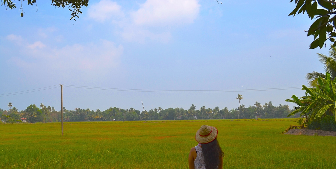 Golden paddy fields hidden away in Allepey