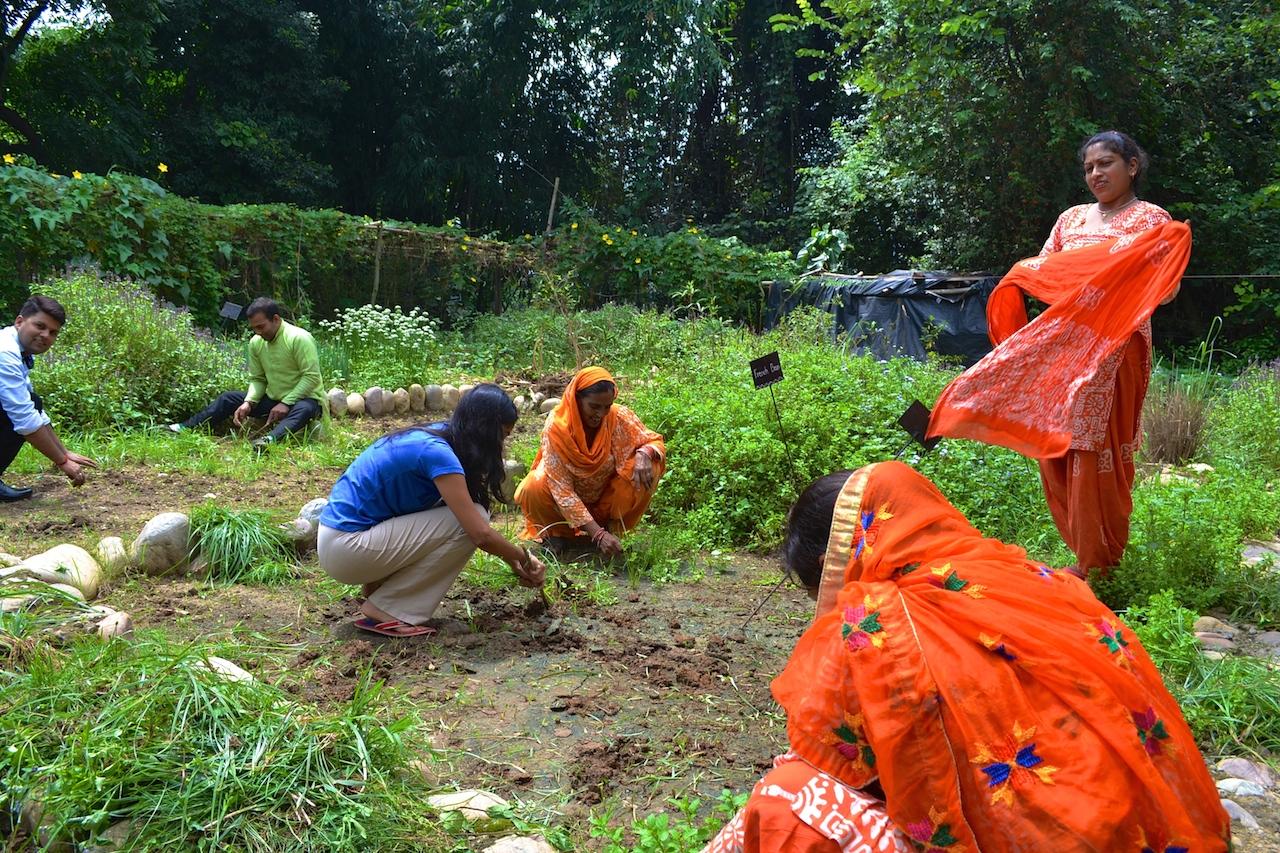 Upasana and her team of ladies in orange de-weeding their organic vegetable garden.