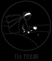 tea-picking.png