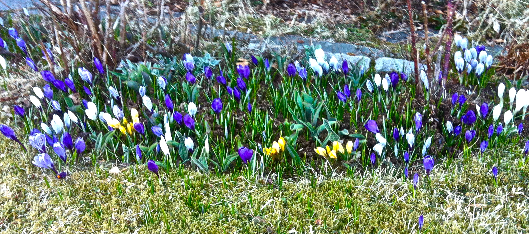 Spring is on it's way, hurray!