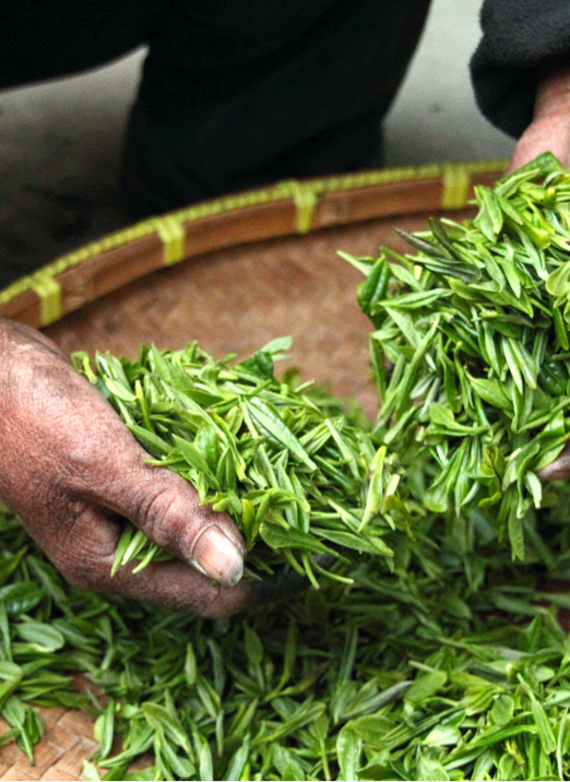 tea-farmhouse-hand-fresh-39347.jpg