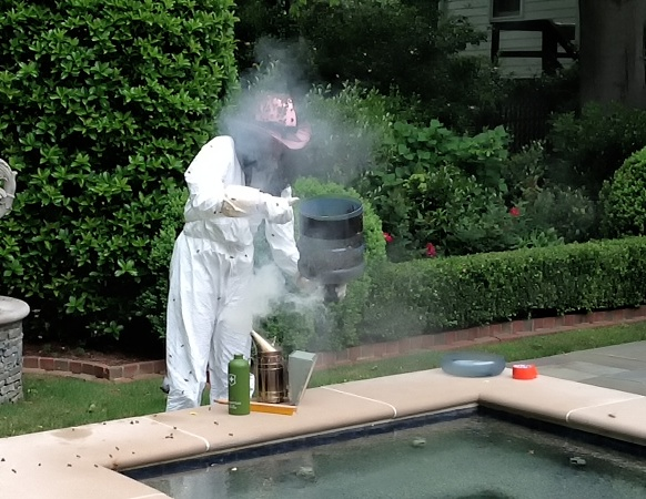 Beekeeper removing the swarm. Photo Credit: Jacques Murphy.