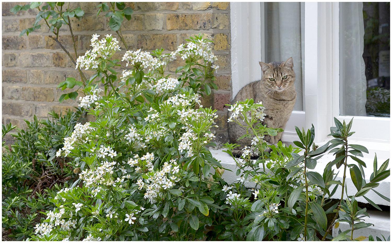 Weekend snapshots - cat.jpg
