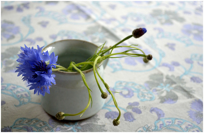 Blue mood flowers.jpg