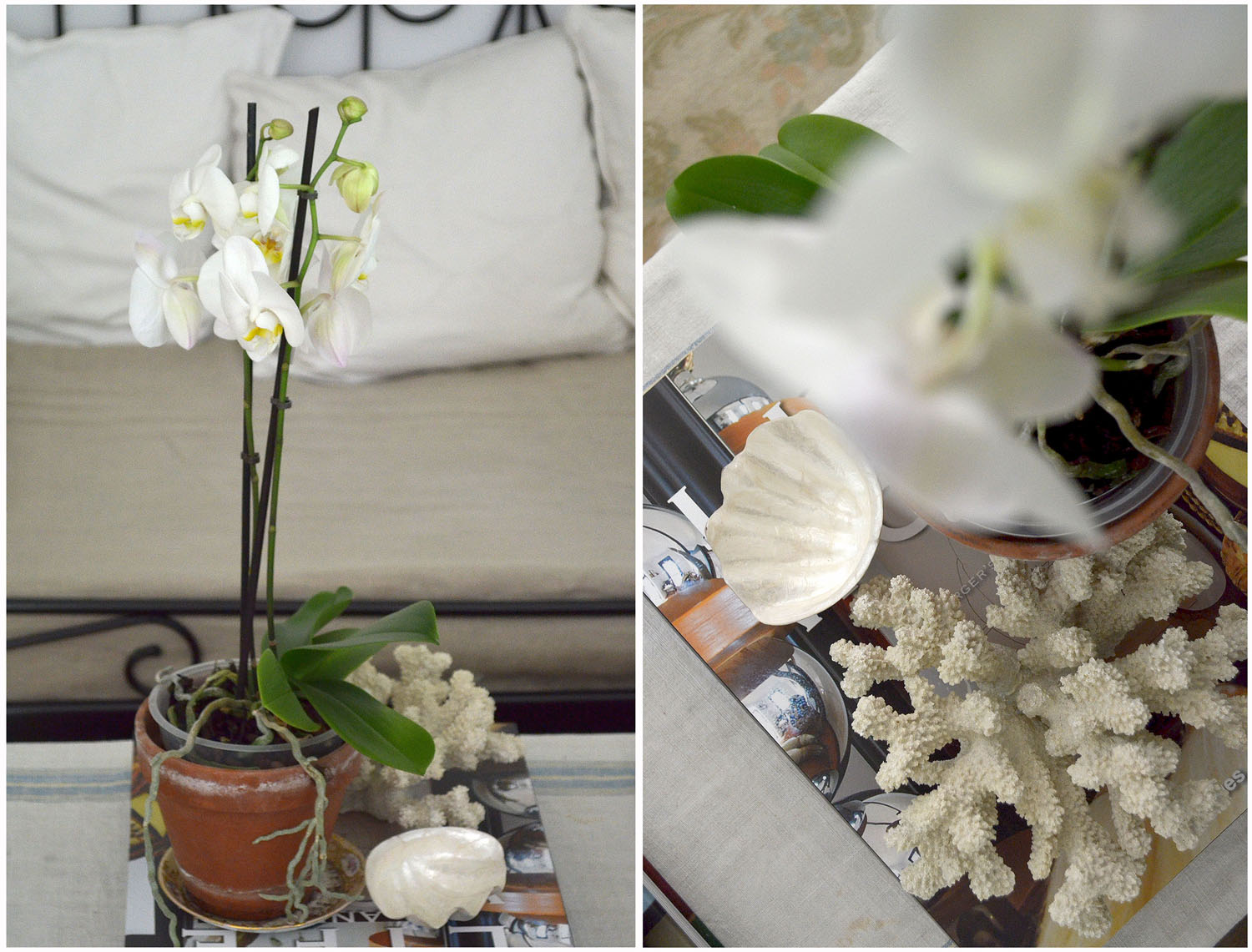 White Orchids at home.jpg