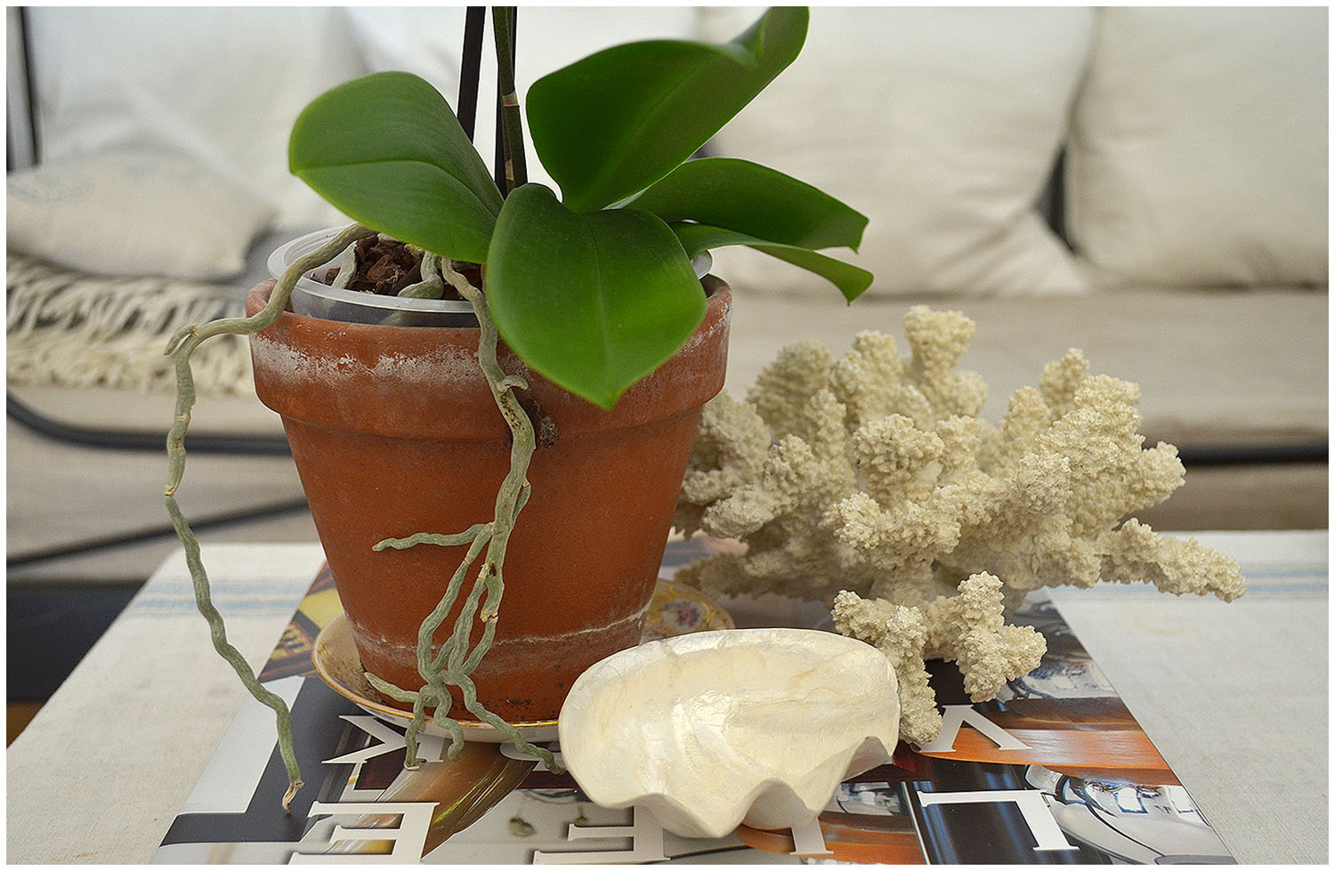 Shell, white coral, white orchid.jpg