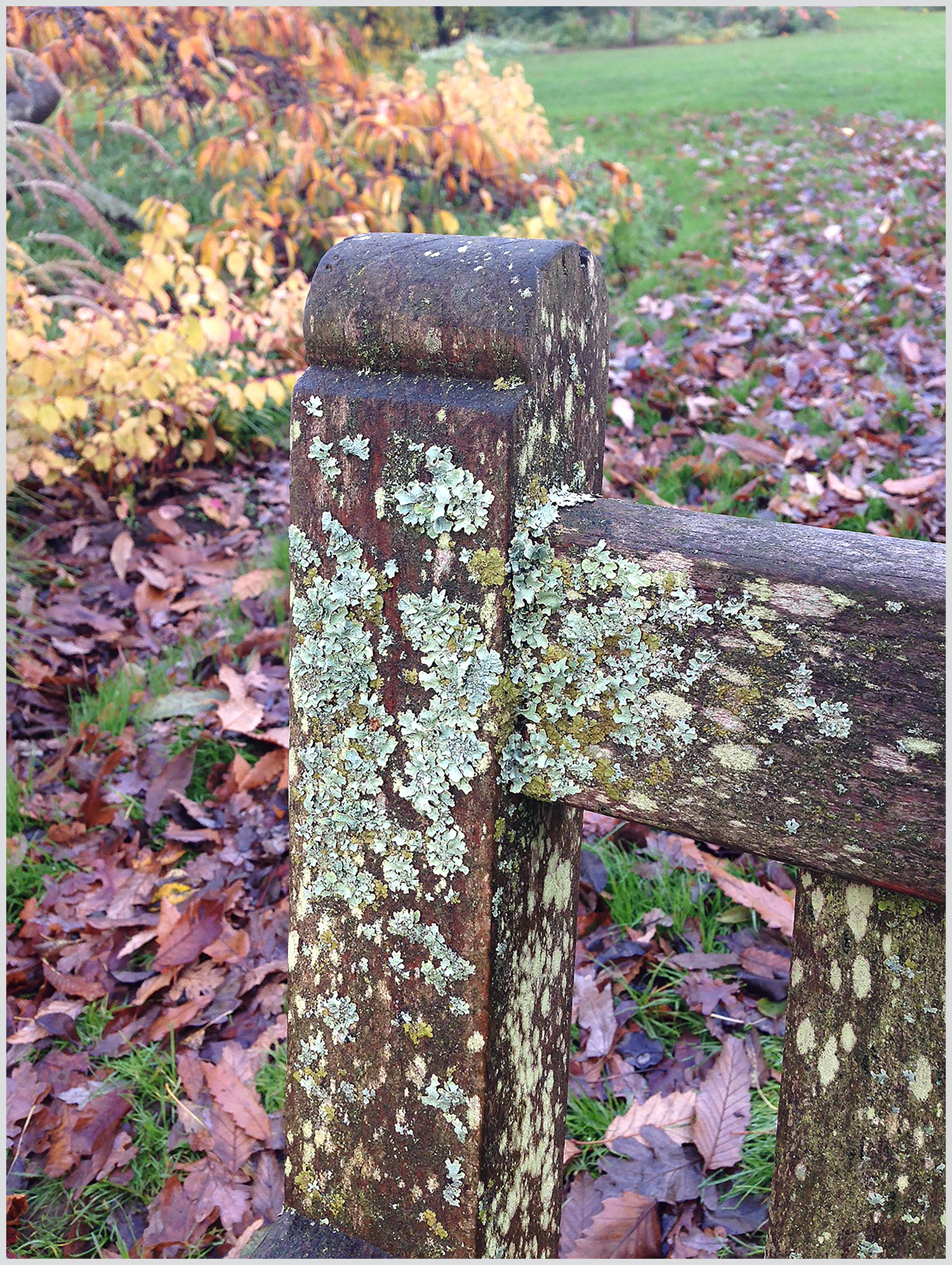 Lichen and colourful leaves