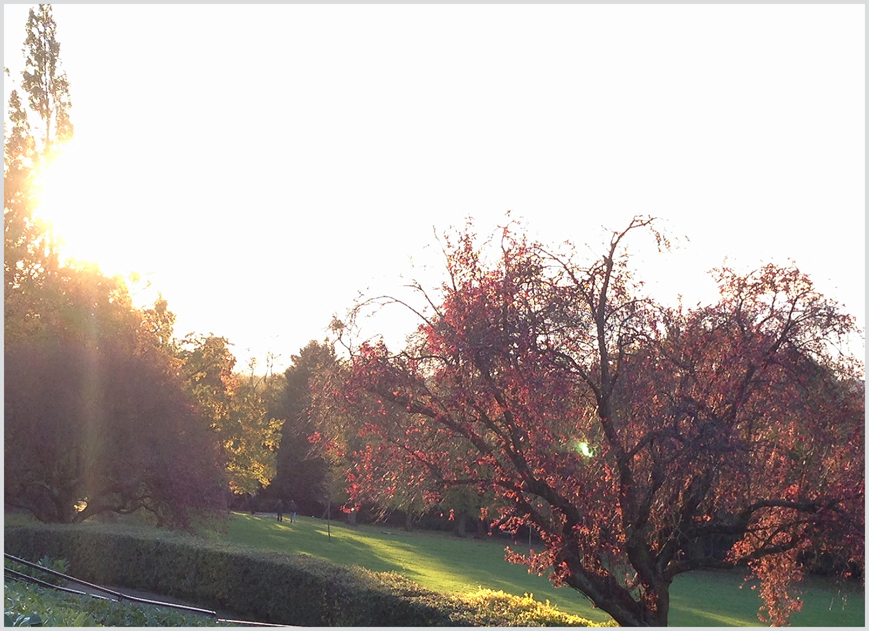 Autumn Sunshine in Horniman Garden
