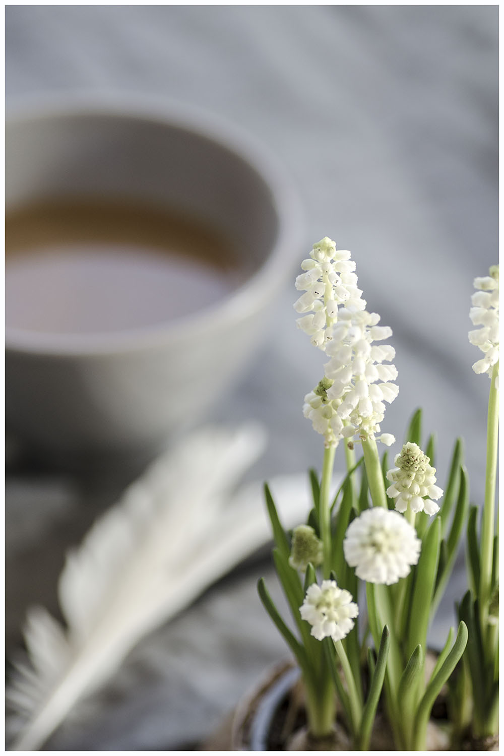 Spring flowers & coffee
