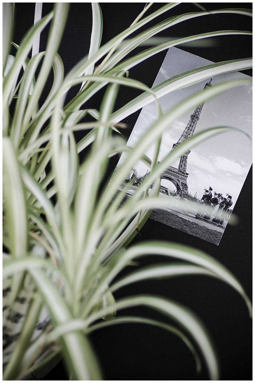 Urban Jungle Styling - Monochrome