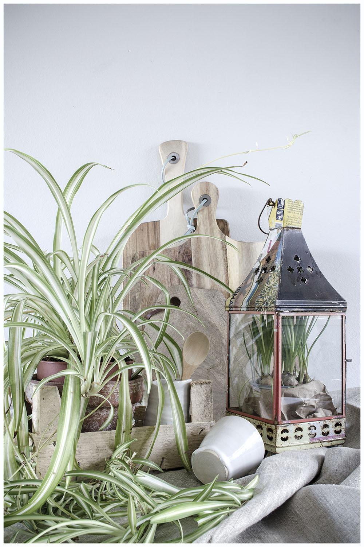 Urban Jungle Styling - Natural Textures