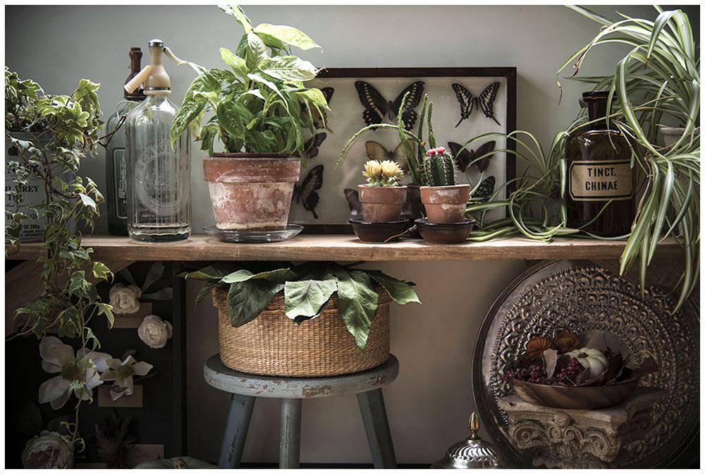 Urban Jungle Bloggers Plant Shelfie