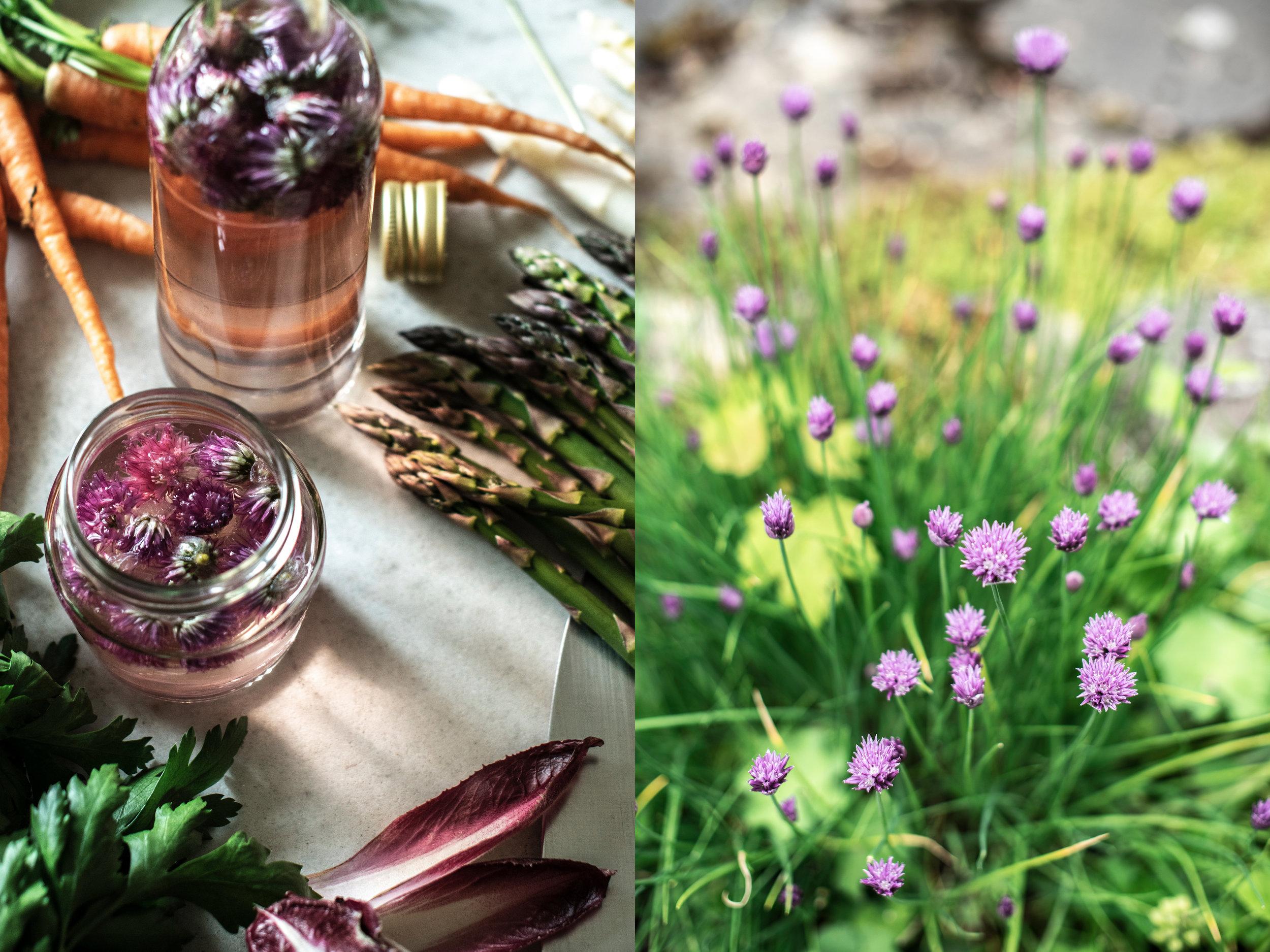 Chive Blossom Vinegar 4.jpg