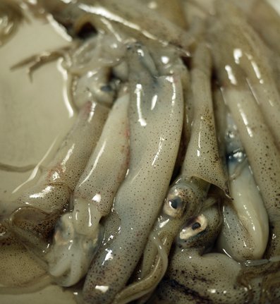Baby squid looking at us before we prepared them for deep frying