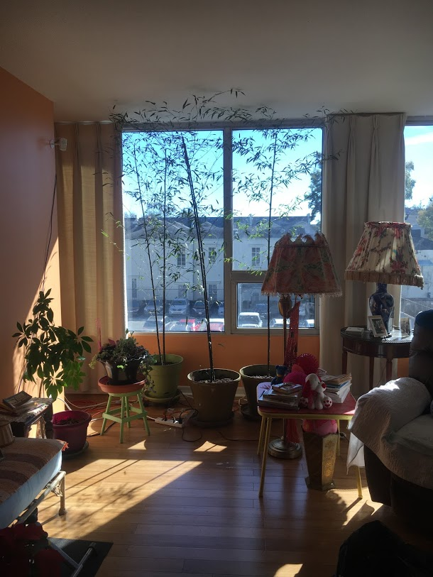 ninth ward nursery - retirement home install4.jpg