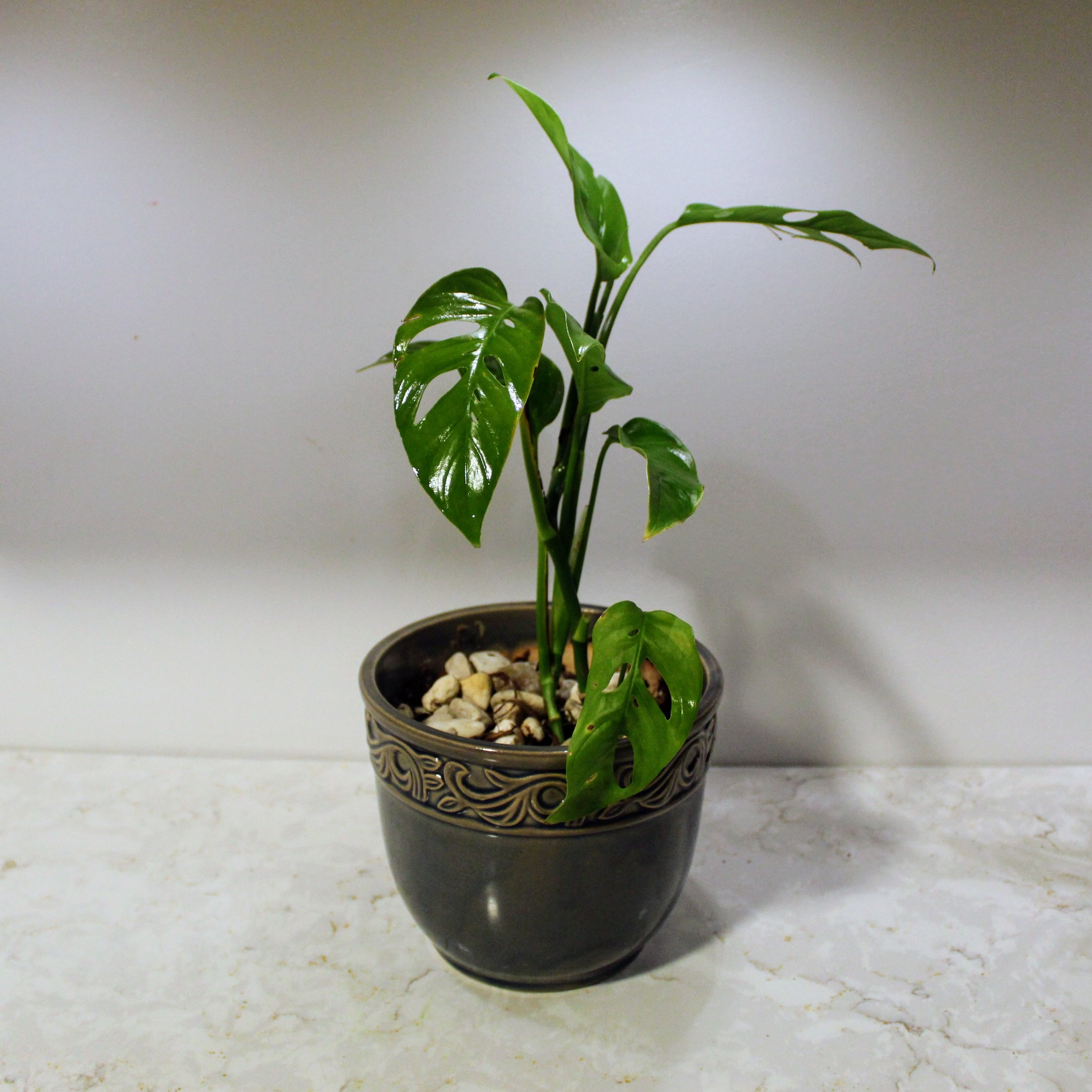 ninth ward nursery - potted plant2.jpg
