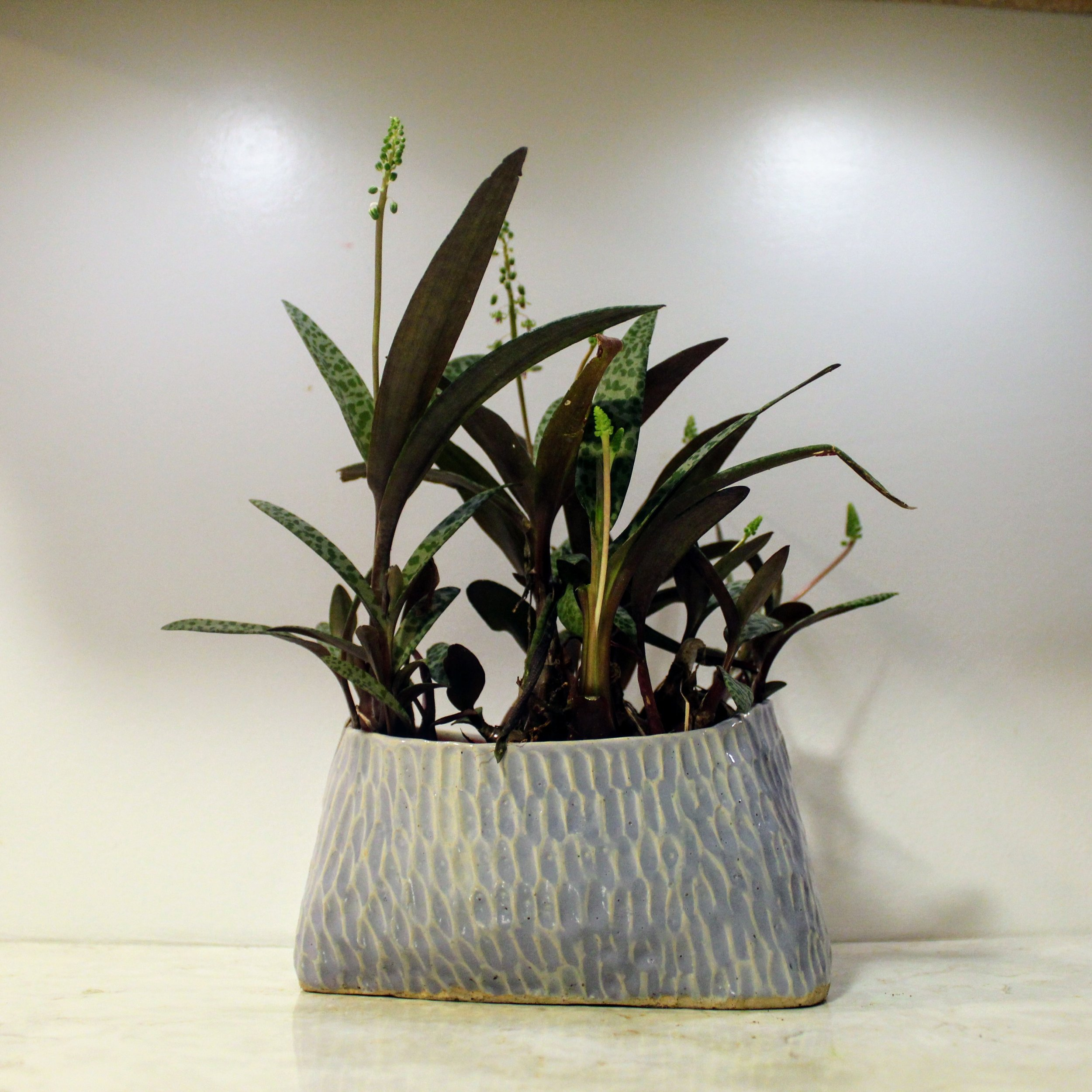 ninth ward nursery - potted plant1.jpg
