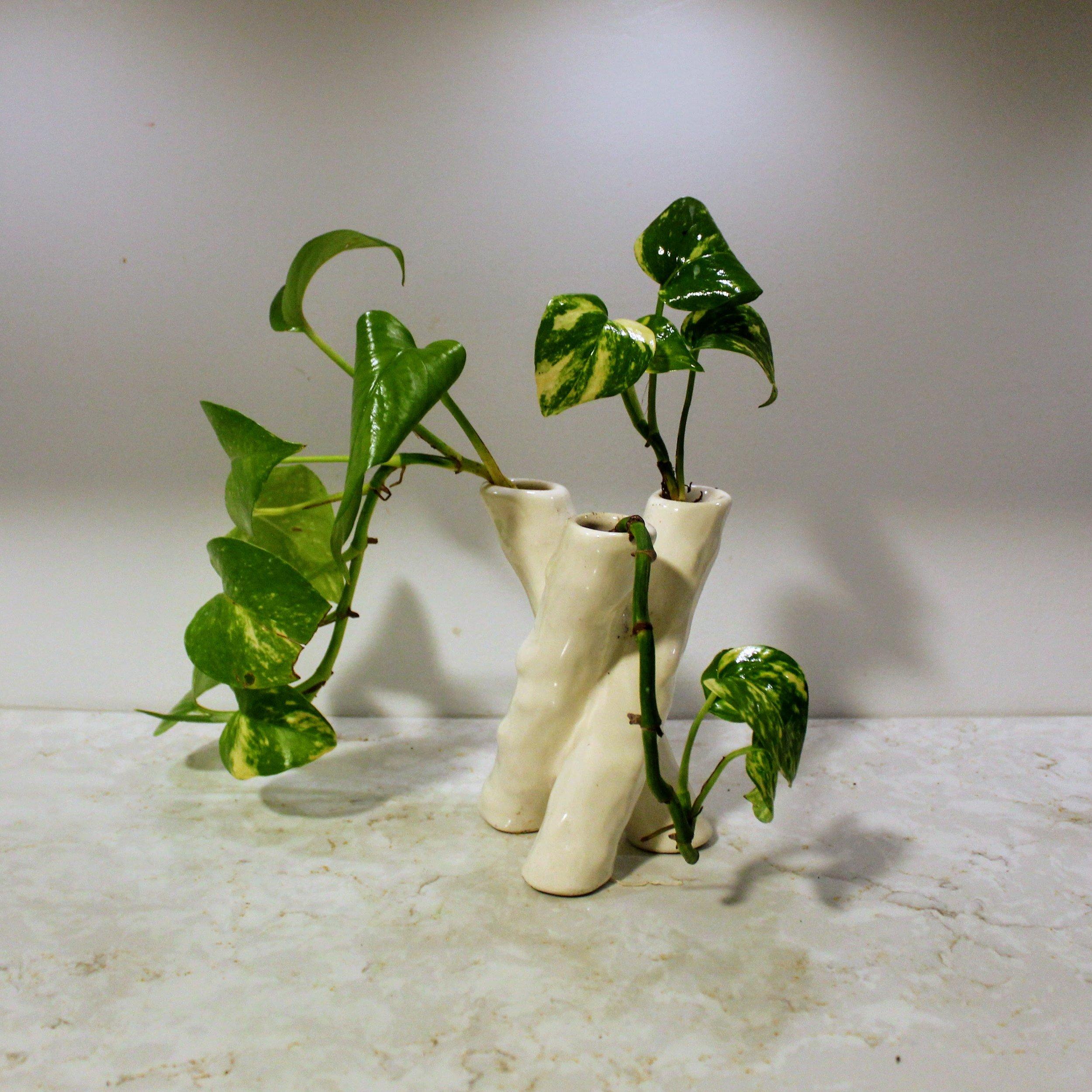 ninth ward nursery - potted plant3.jpg