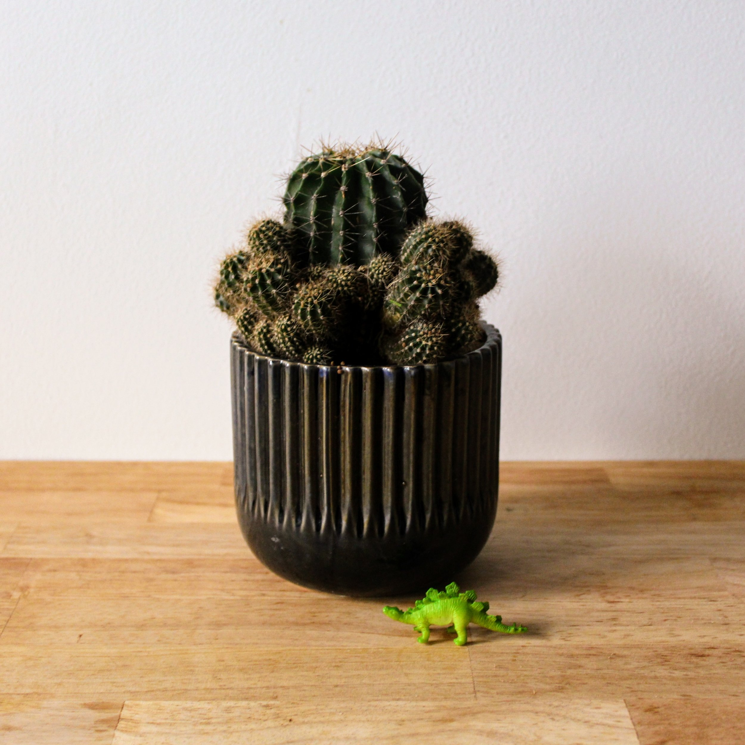potted plant1.jpg