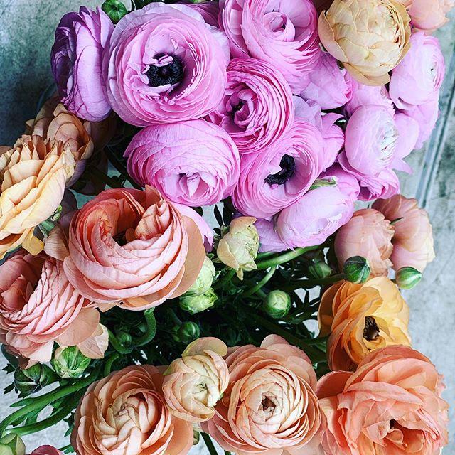 Such beautiful ranunculus for this weekend! #artistryinbloom #417wedding #417florist #weddingflorist #pinkranunculus #peachranunculus