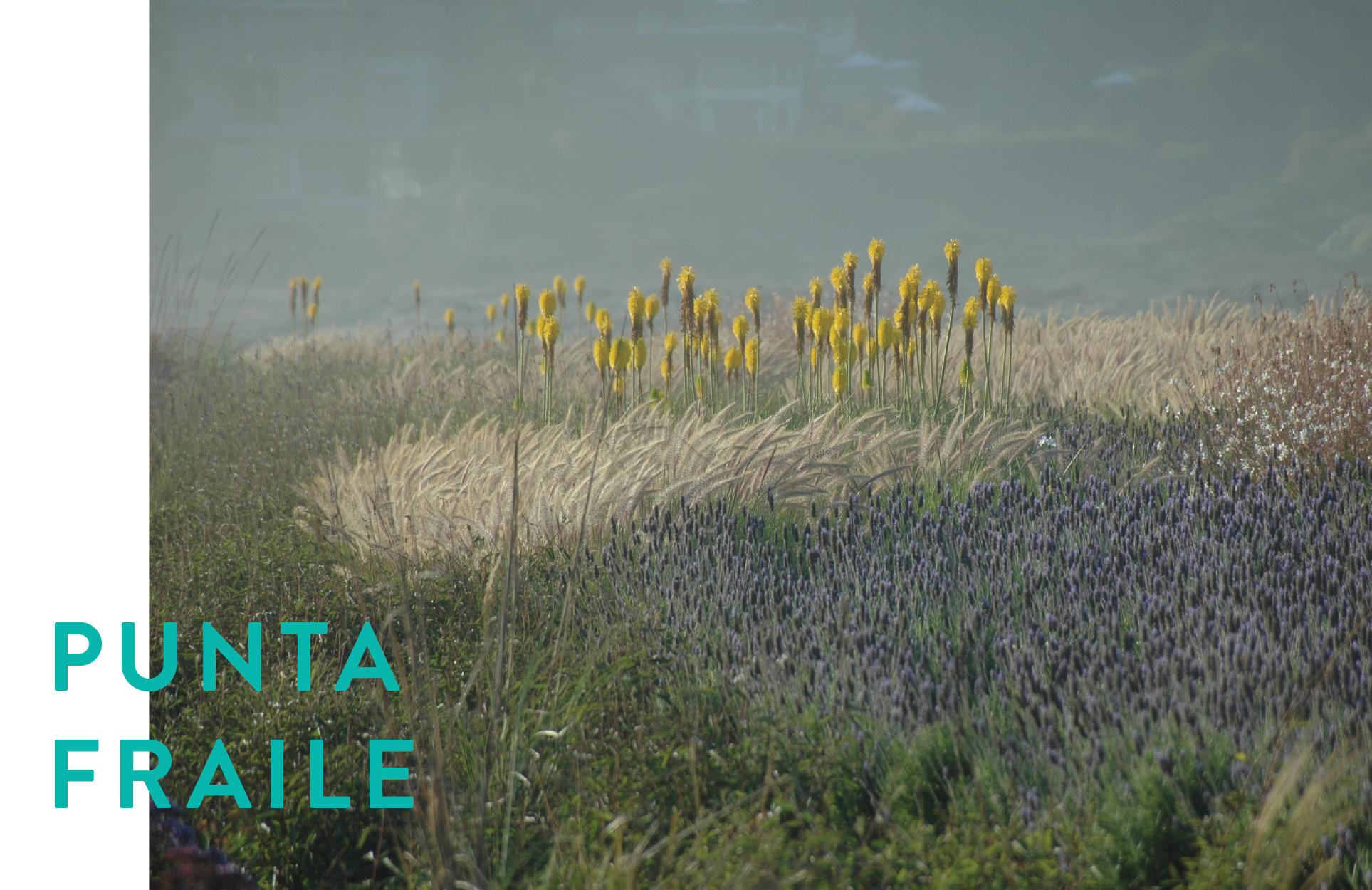 Formato Panoramico PUNTA FRAILE-01.jpg