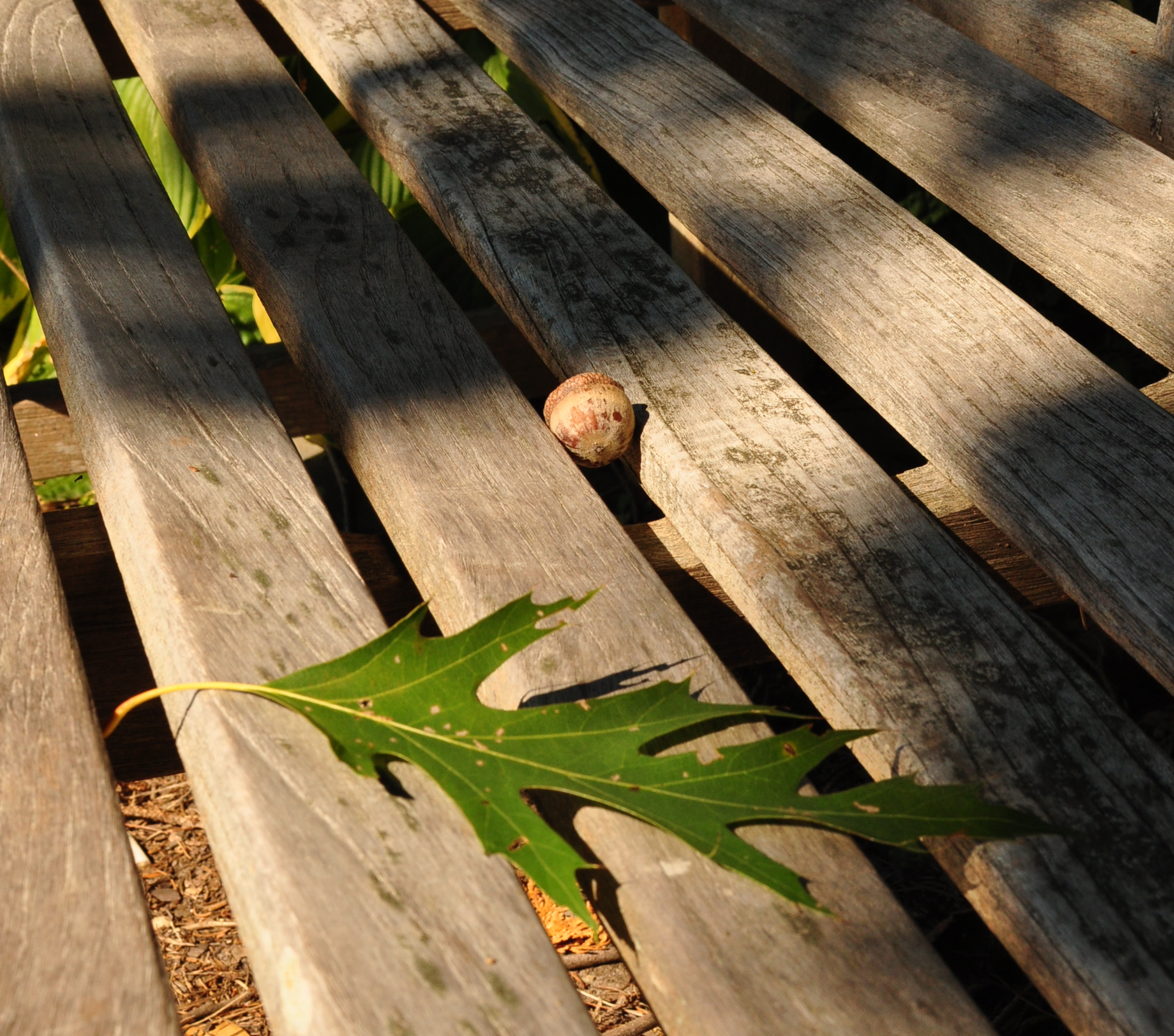 Acorn, leaf, bench.  We already have everything we need.