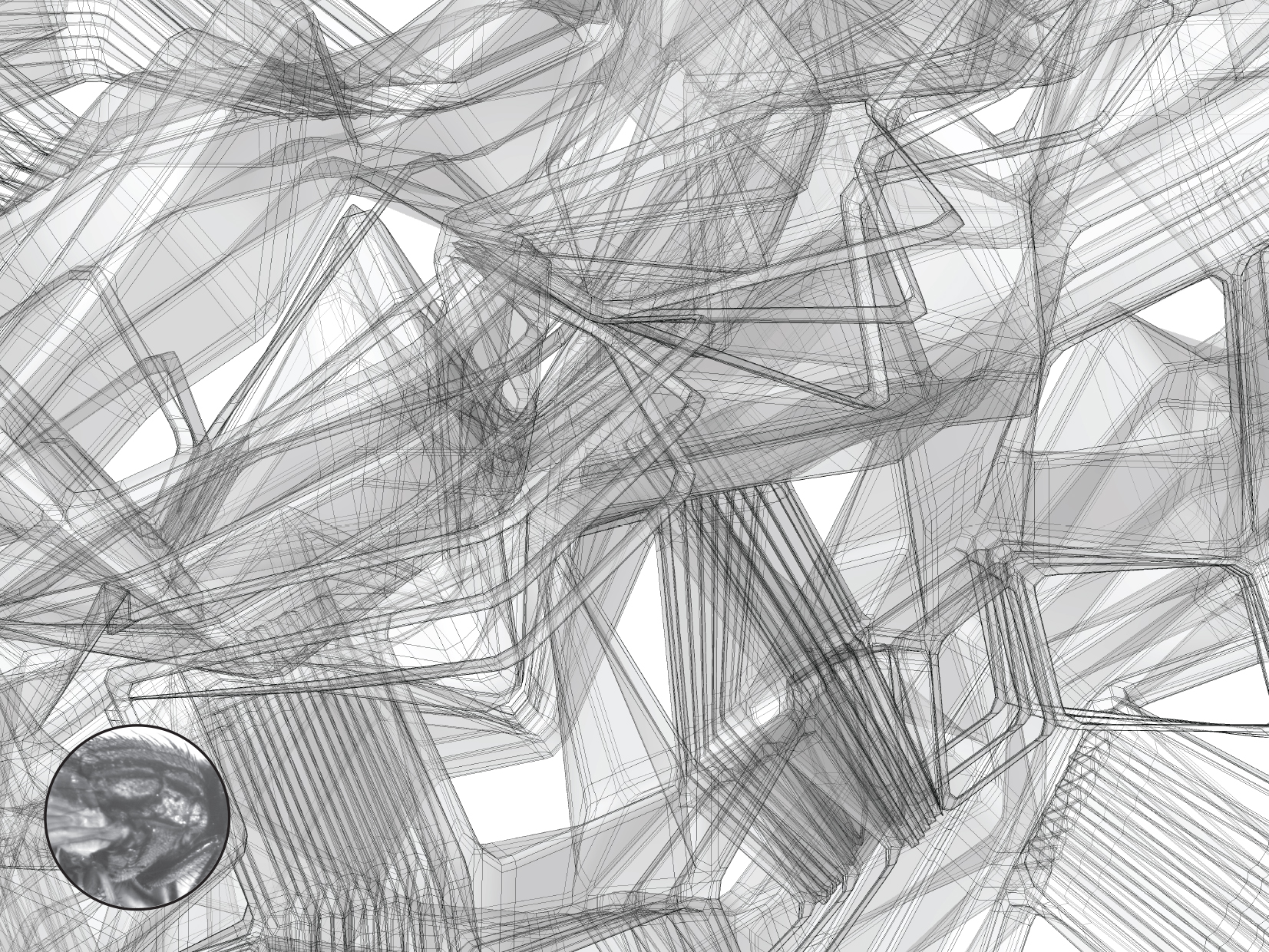 Flori_Kryethi_compiled-21 copy.jpg