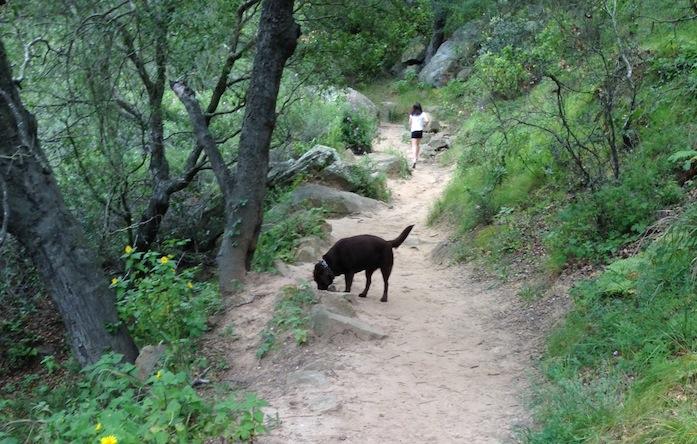{Tilda hiking in Santa Barbara}