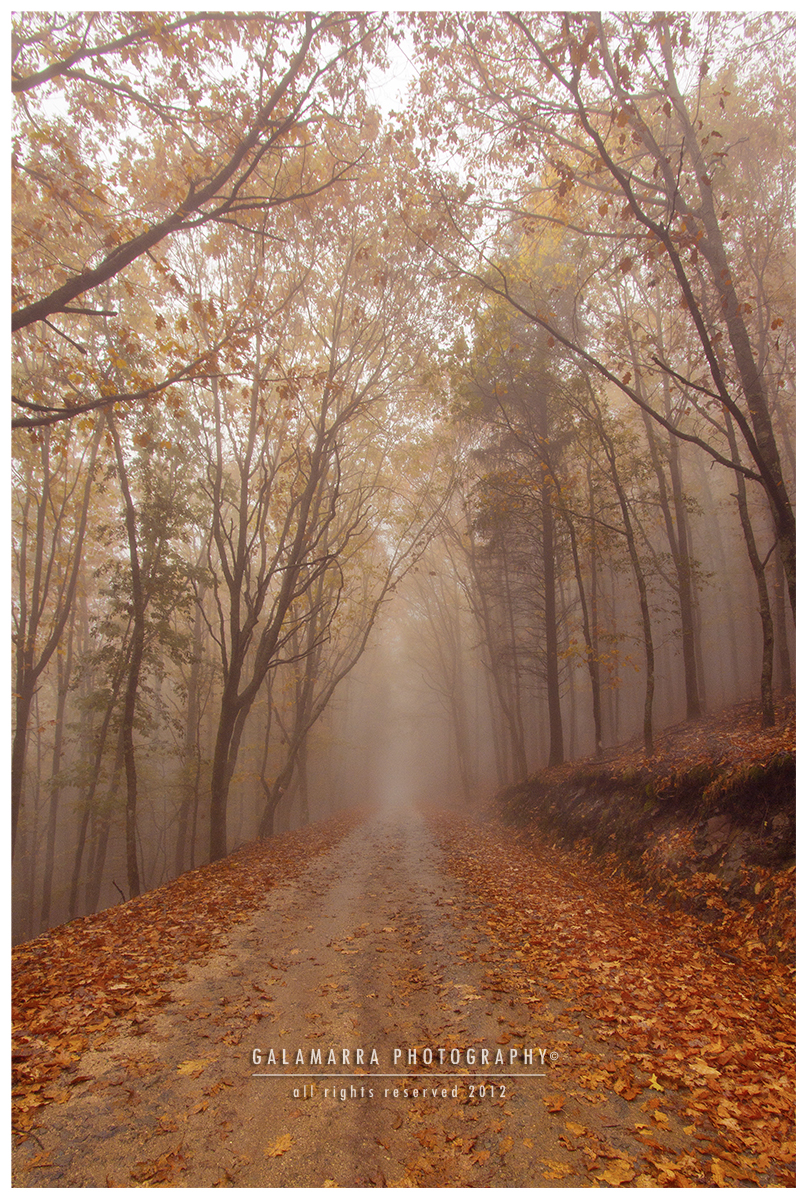 _MG_7346_Web_Road_of_Life's_Fog.jpg