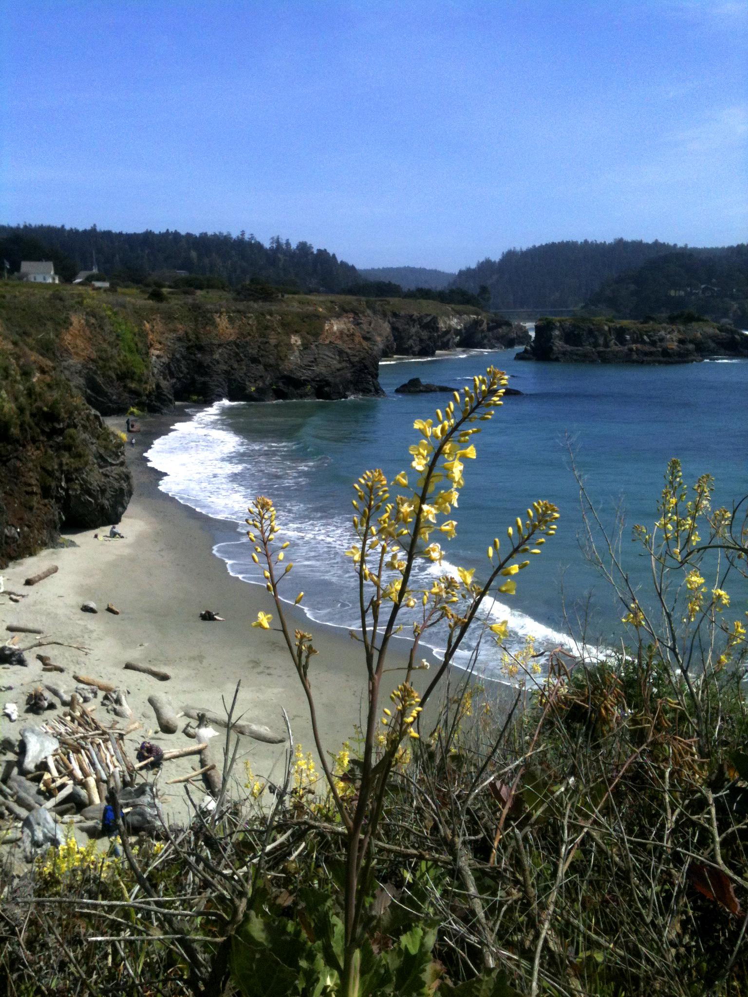 Mendocino Beach
