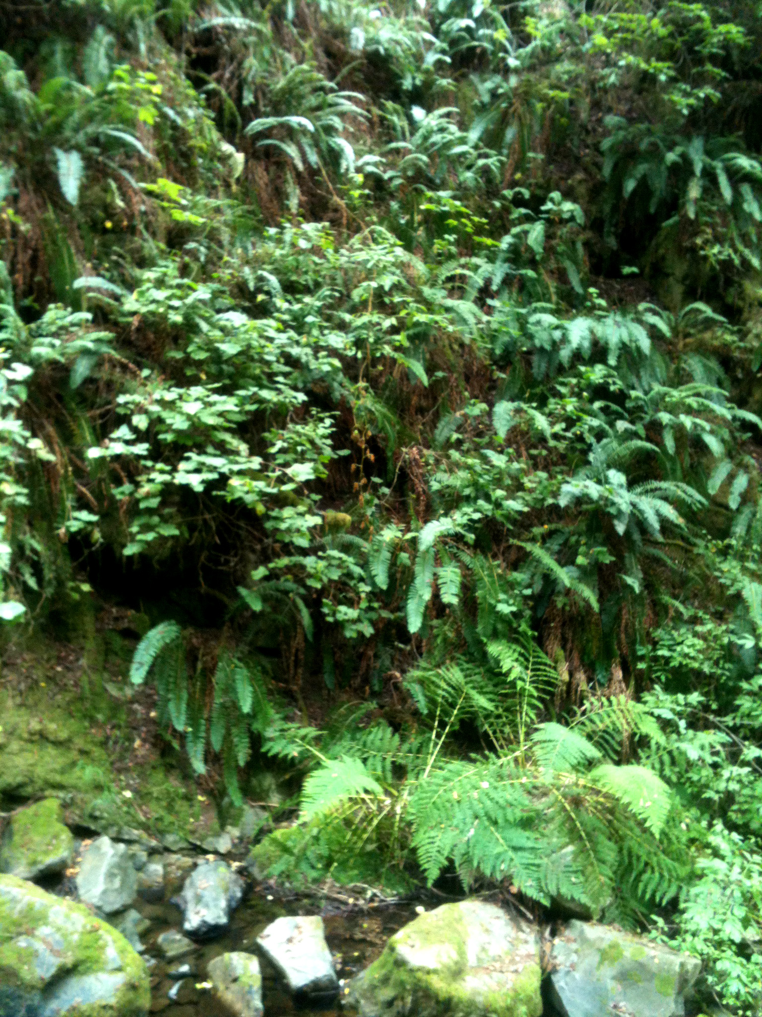 Lush ferns and walking along a creek.