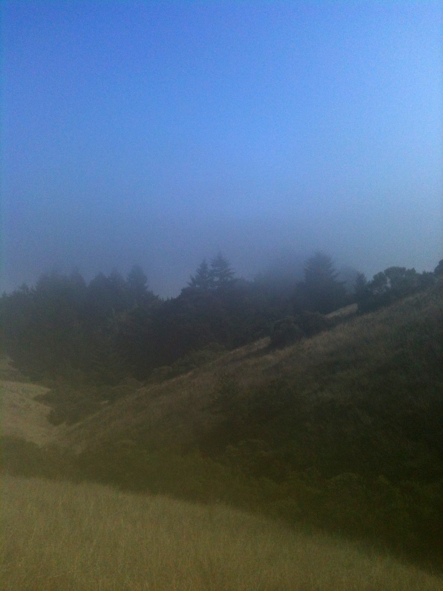 This part of the trail wove in and out of the fog.