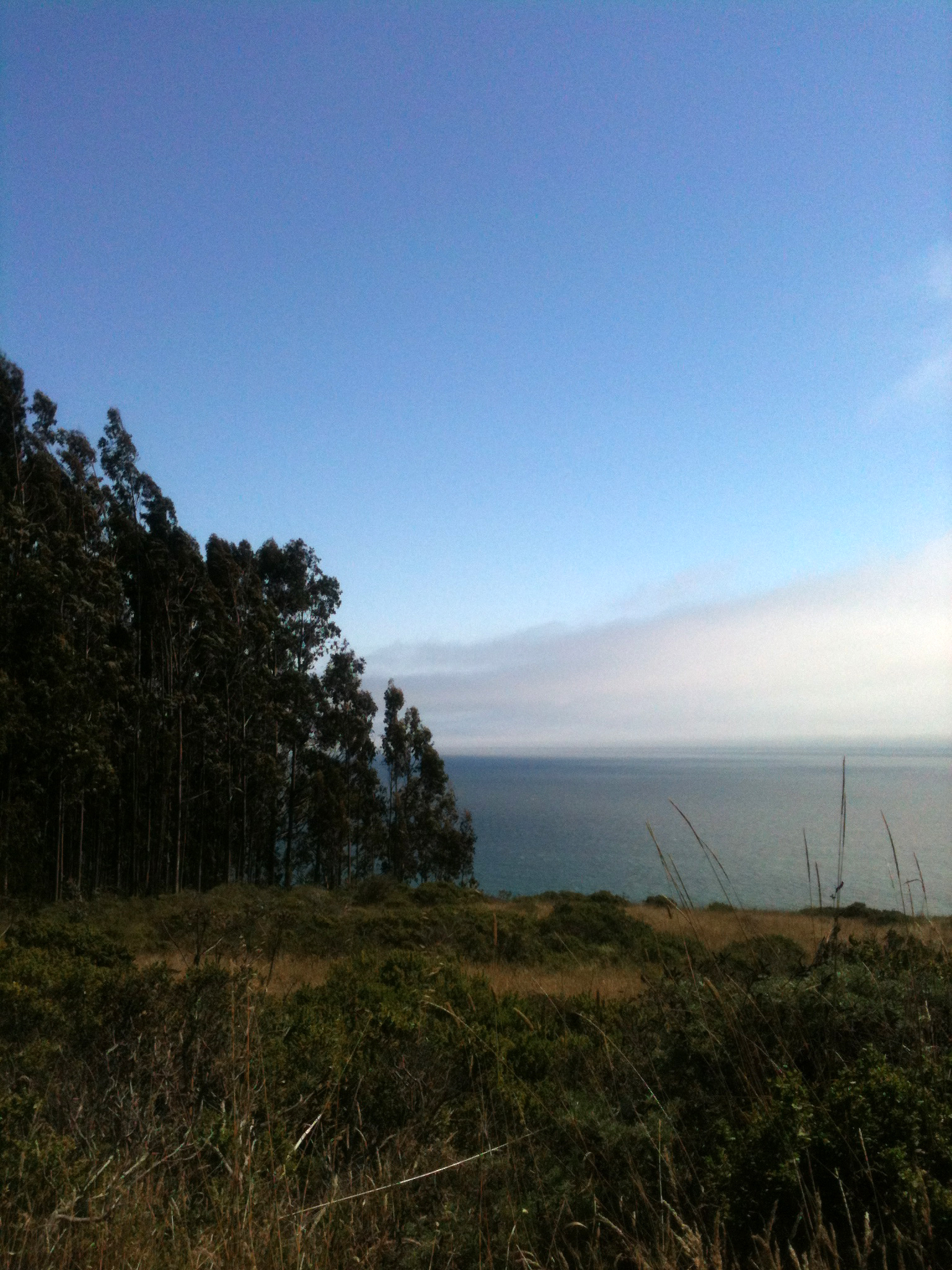 Just out of the Eucalyptus, a grand view of the sea.