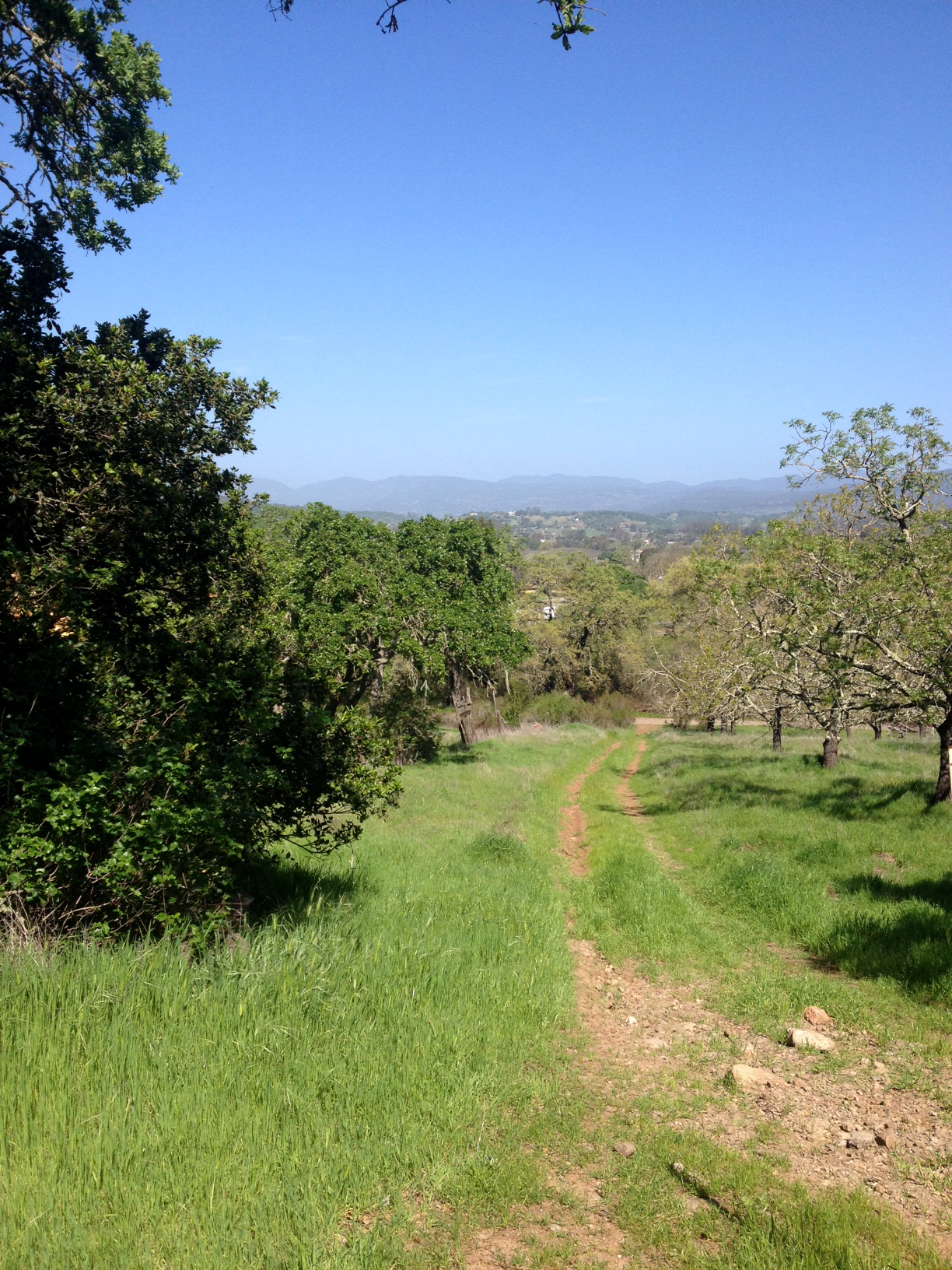 View from a recent hike on Saturday in Napa's  Skyline Wilderness Park