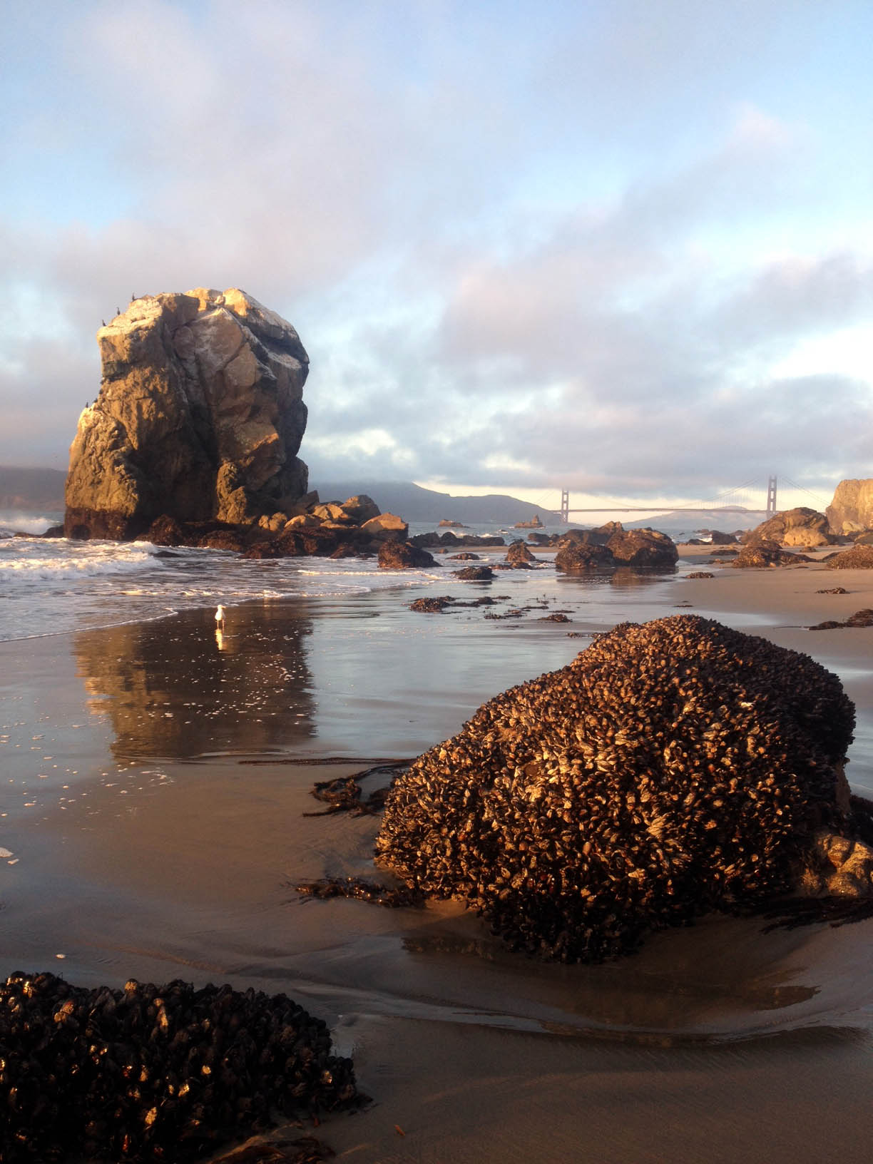 The view of the Golden Gate from Mile Rock Beach. You can see the mussels on the rocks here.