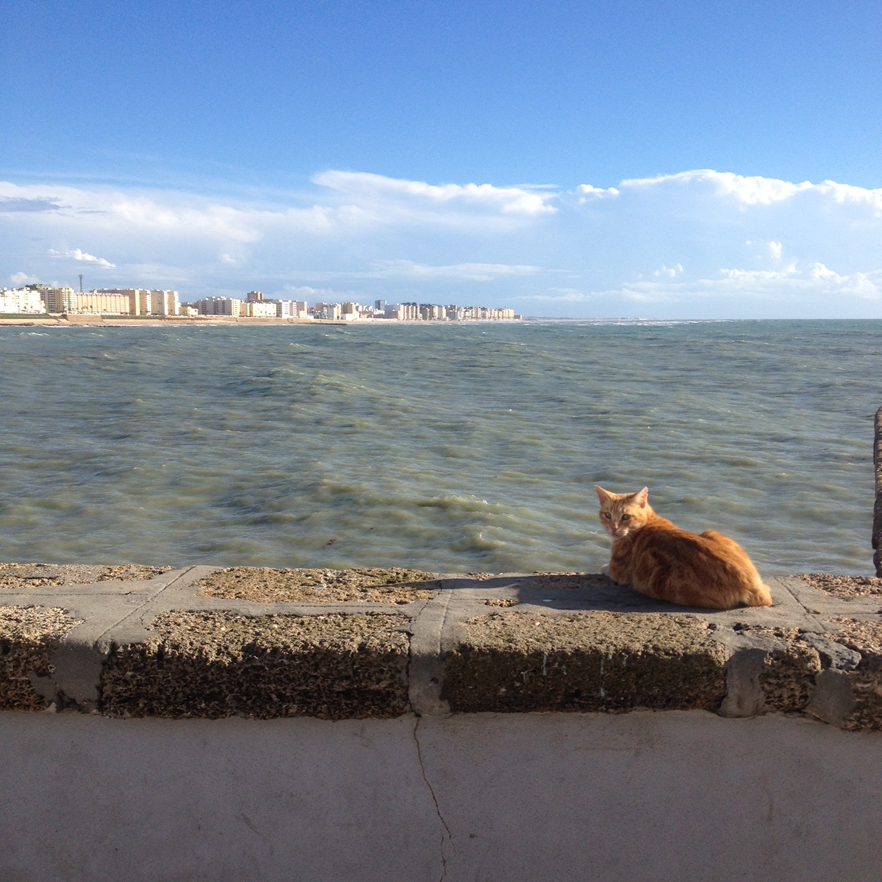 A sea cat on the city wall looking out at New Town.